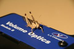 Desert locust (Schistocerca gregaria) in a wind tunnel, generating detailed, time-resolved description of a flying animal's wake using tomographig PIV technology